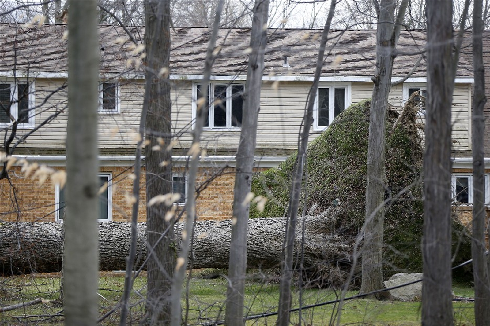 A huge oak tree lies on its side with its roots reaching almost to the second floor in the backyard of a house on Woodland Drive in Orchard Park Thursday, March 9, 2017.