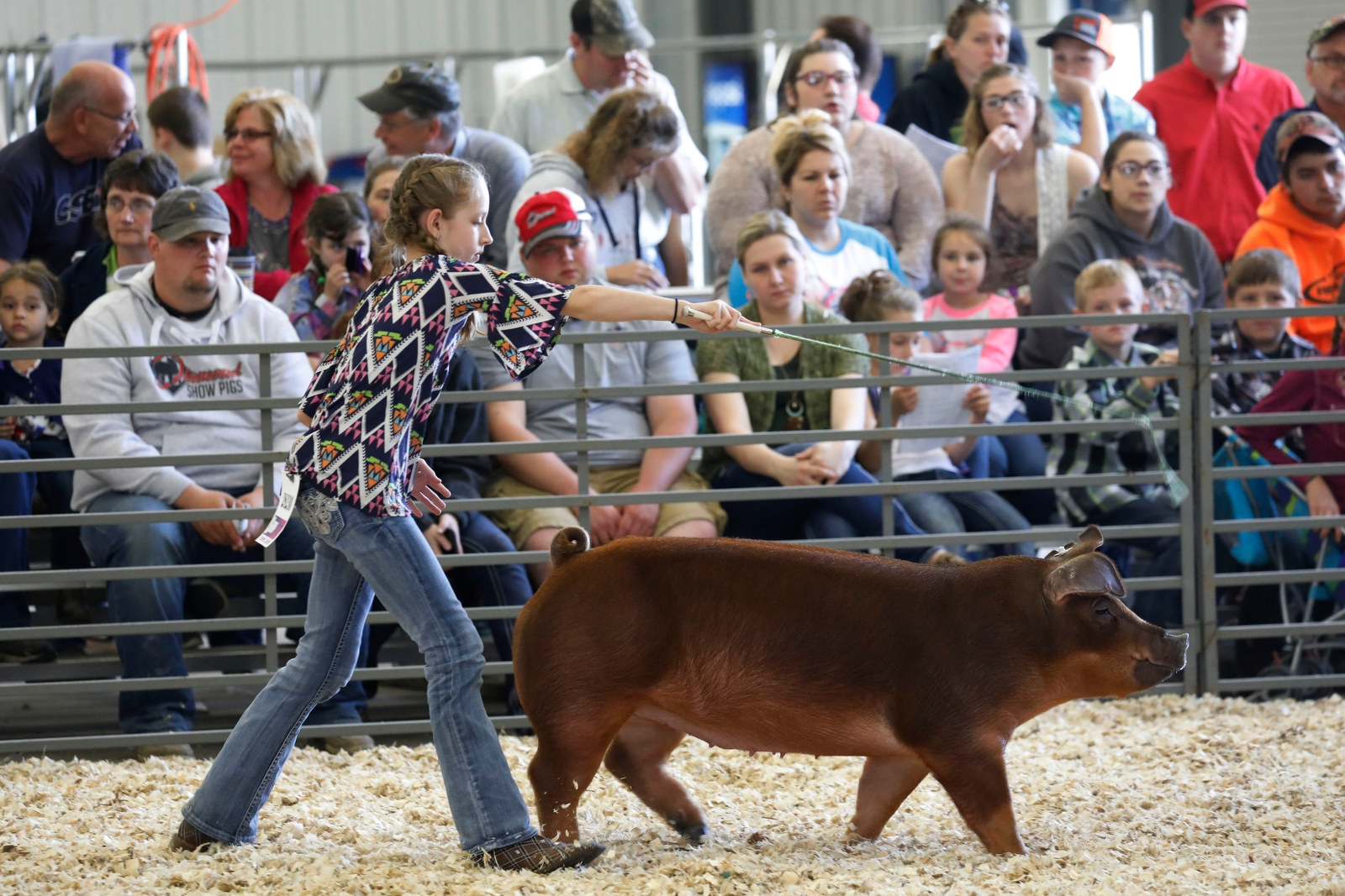 Lilly Underberg, 13, of Springville guides her pig Reba, a purbred duroc, during competition.
