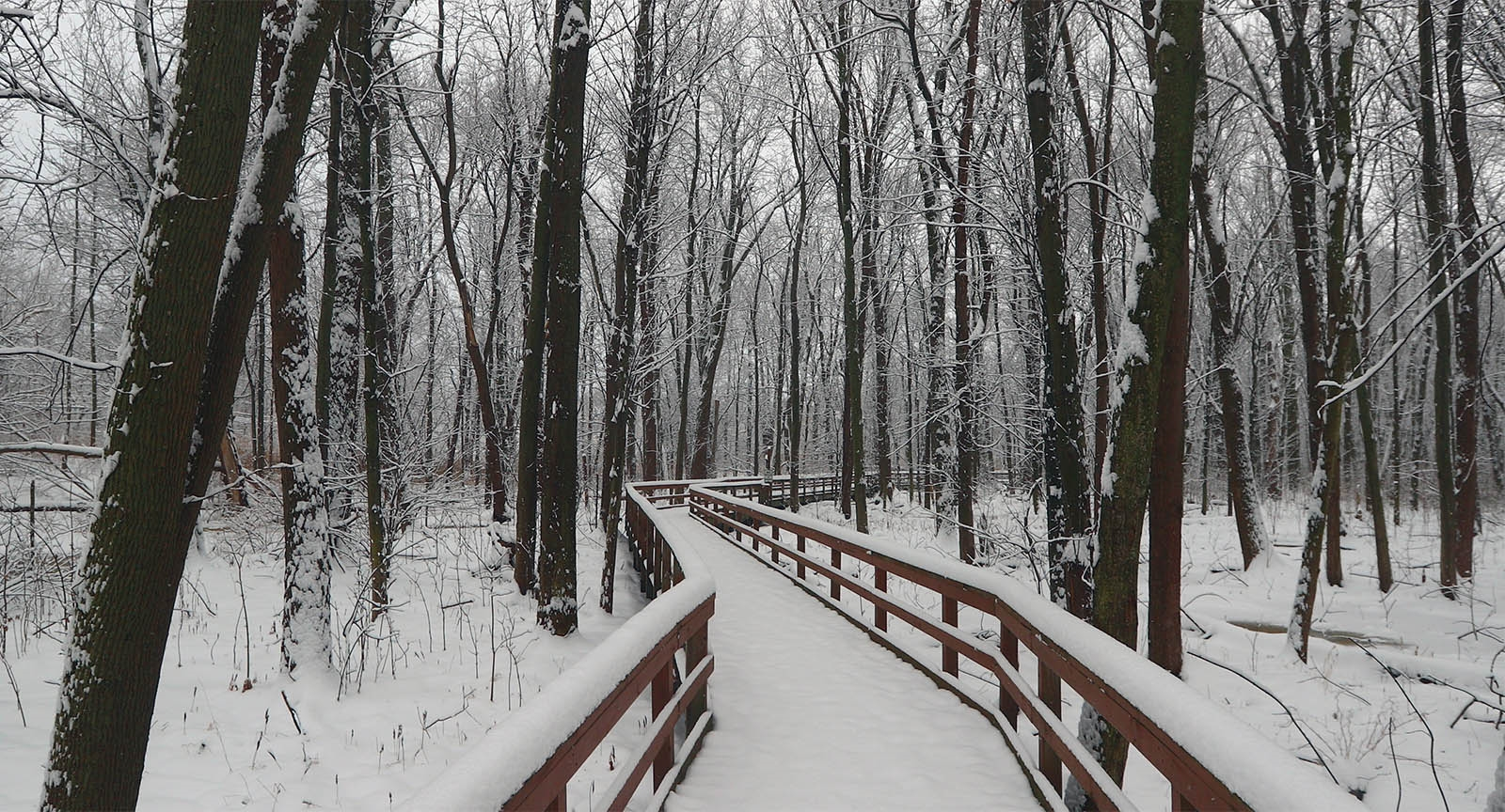Snow clings to the trees and foot path at Great Baehre Conservation Park in  Amherst.
