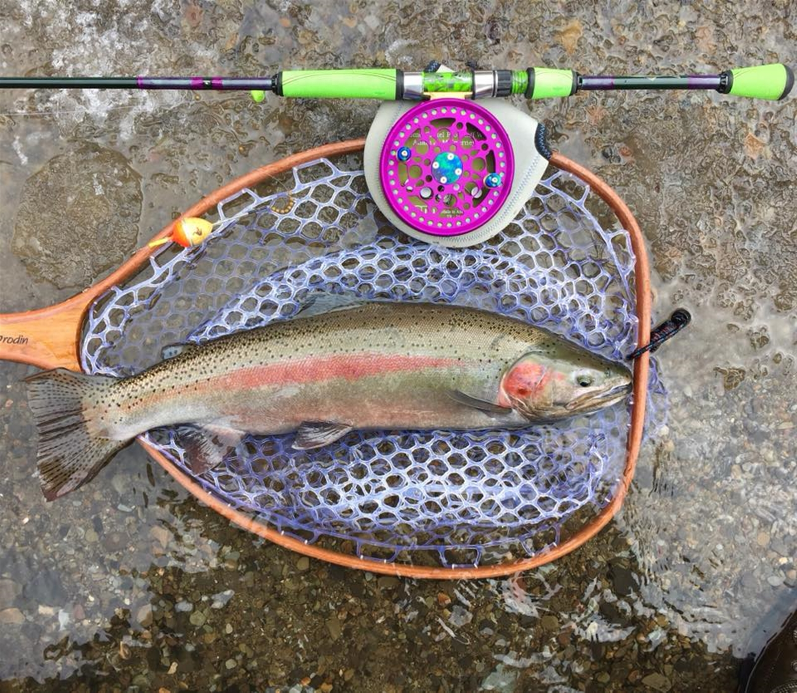 Adam McInerney of Cattaraugus hit some tribs west of Cattaraugus Creek and found the January thaw to his liking. He hit these steelhead before the rains came and messed things up Saturday night.