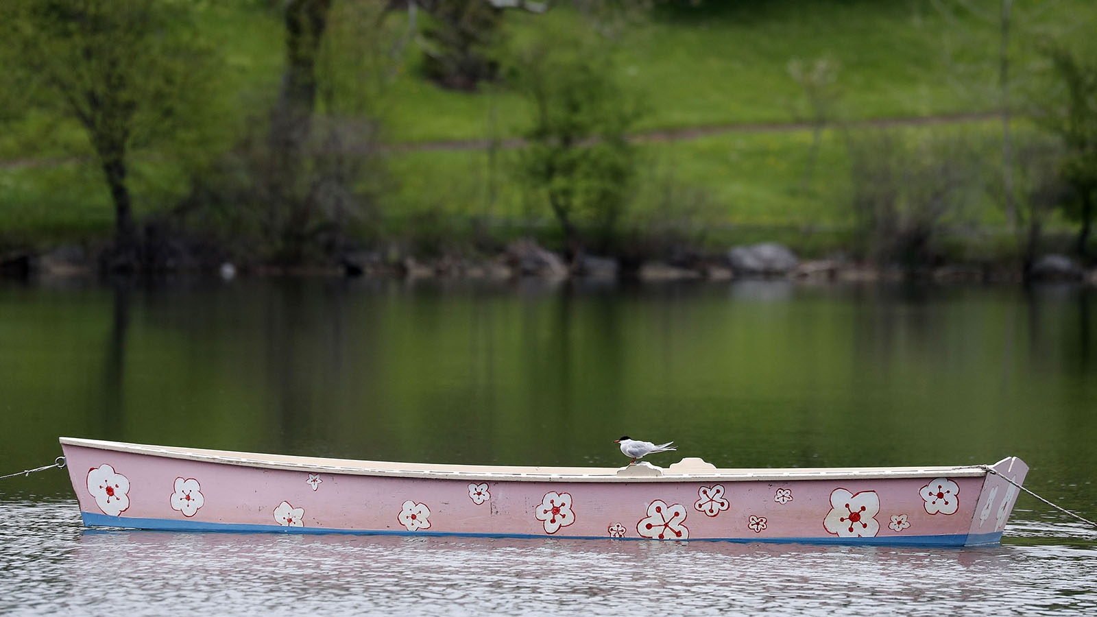 Day 137: May 17, 2018 - A bird rests on a boat at Hoyt Lake in Buffalo.
