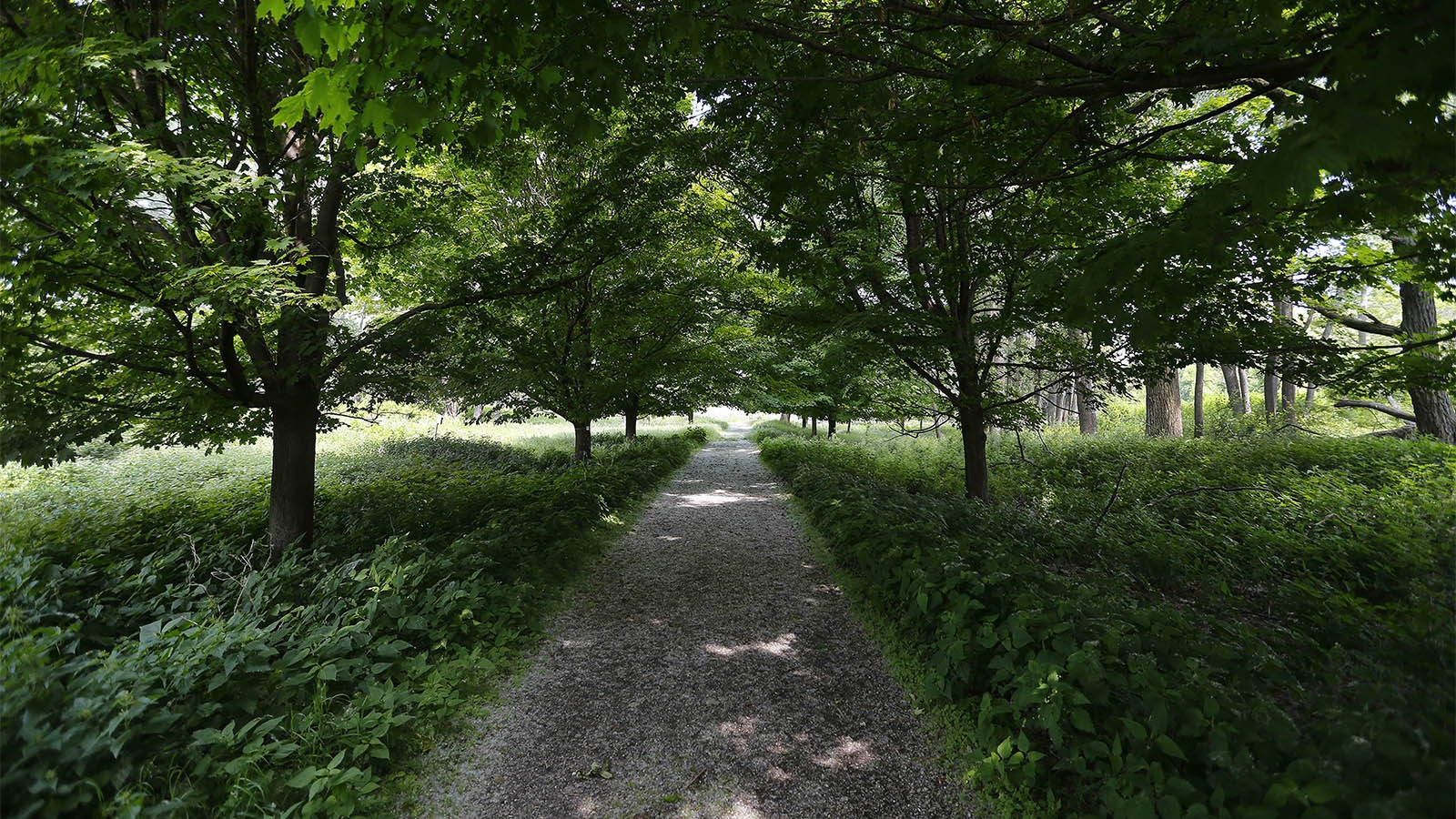 Day 175: June 24, 2018 - A path through the trees at the Tifft Nature Preserve in Buffalo.